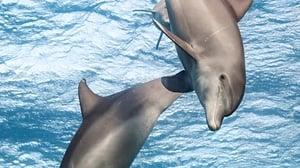 Disneynature: Dolphin Reef