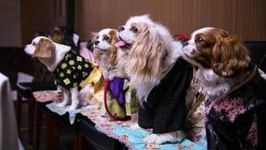 Dogs 1. Sezon 4. Bölüm (Türkçe Dublaj) izle