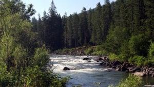 cattura di In mezzo scorre il fiume