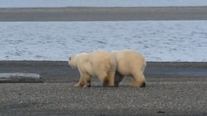 Alaska's Grizzly Gauntlet: 1×2