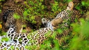 Die Leopardin