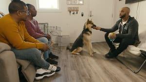 Psi terapeuta w akcji: s01e02 online