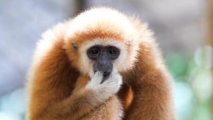 72 Dangerous Animals: Asia Season 1 Episode 9