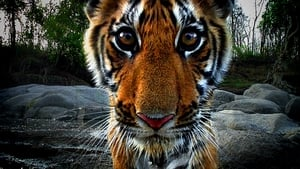 English series from 2008-2008: Tiger: Spy In The Jungle