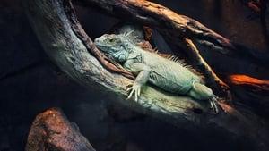 72 animaux dangereux en Amérique latine