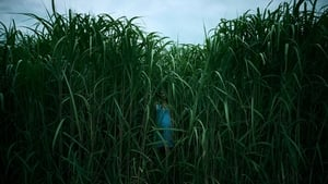 In the Tall Grass (2019) NF WEB-DL 480p, 720p