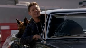 Supernatural Season 9 : Dog Dean Afternoon