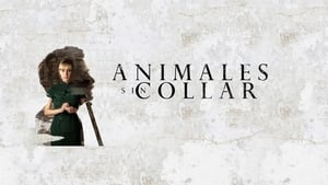 movie from 2018: Animales sin collar