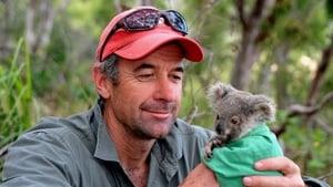 Cracking the Koala Code