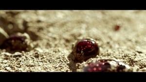 movie from 2017: Jagveld