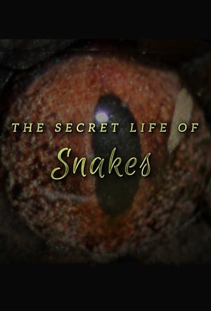 Image The Secret Life of Snakes
