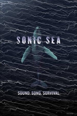 Image Sonic Sea