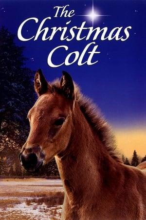 საშობაო კვიცი The Christmas Colt