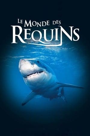 Le monde des requins