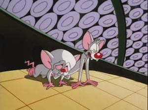 Pinky and the Brain: 4×1