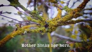 Mother Honks Her Horn