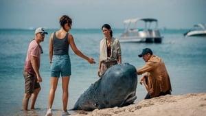 Retter der Meere – Tödliche Strandung