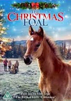 საშობაო კვიცი / The Christmas Colt