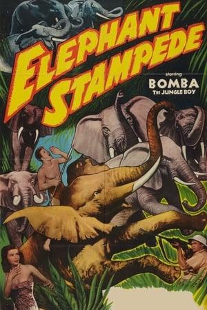 Image Elephant Stampede