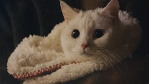 Meow, the Secret Boy: S1-Ep1-2