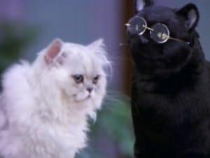 Salem and Juliette