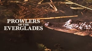 Prowlers of the Everglades