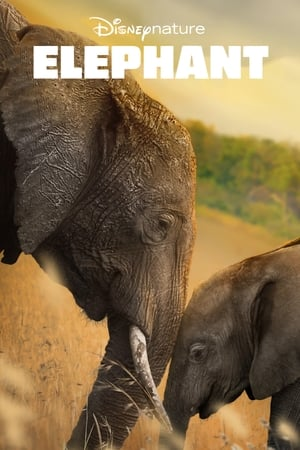 Film Elephant streaming VF gratuit complet