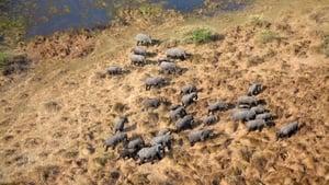 Elefanten hautnah (2020)