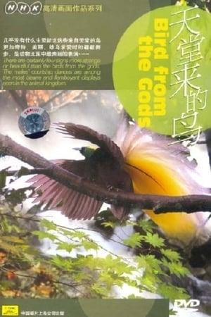 Birds from the Gods