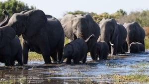 Los elefantes (2020) | Elephant