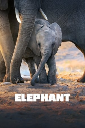 Watch Elephant Full Movie
