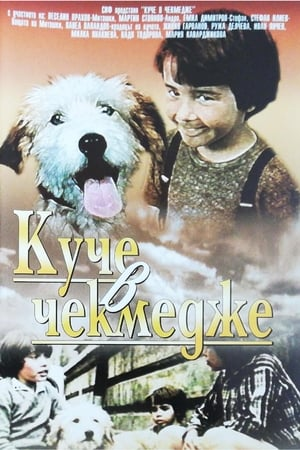 A Dog in a Drawer-Azwaad Movie Database