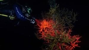 The Aquarium Season 02 Episode 04 S02E04