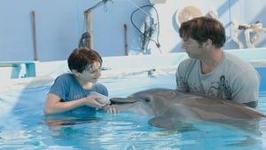 Winter – El Delfin (2011) | La gran aventura de Winter el delfín | Dolphin Tale |