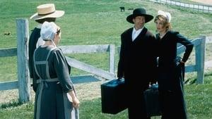 Szegény embert az Amish húzza