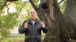 Les Arbres Remarquables, un patrimoine à protéger (2019)