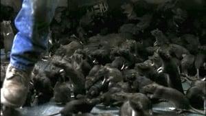 Rats – Notte di terrore 2002 Streaming Altadefinizione