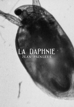 La daphnie