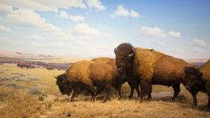 Yellowstone [2020]