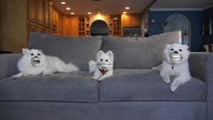 3 DOGS ON A COUCH (2021)