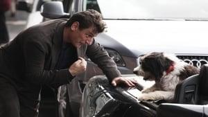 Italian movie from 2010: Un cane per due