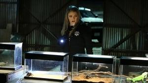 CSI: Las Vegas - Temporada 15