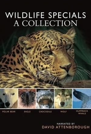 BBC Wildlife Specials