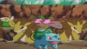 Pokémon Season 5 :Episode 16  Bulbasaur... the Ambassador!