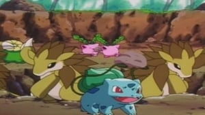 Bulbasaur... the Ambassador!
