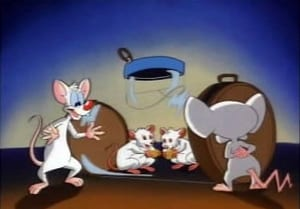 Pinky and the Brain: 1×19