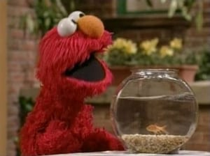 Sesame Street Season 35 :Episode 2  Best Pet in the World