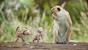 Monkey Kingdom – Το βασίλειο των μαϊμούδων
