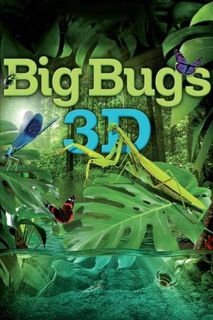 Big Bugs 3D