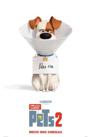 Assistir Pets: A Vida Secreta dos Bichos 2 online